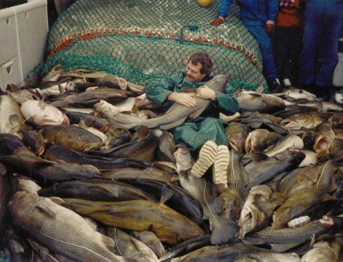 Изчезват ли големите хищни риби?