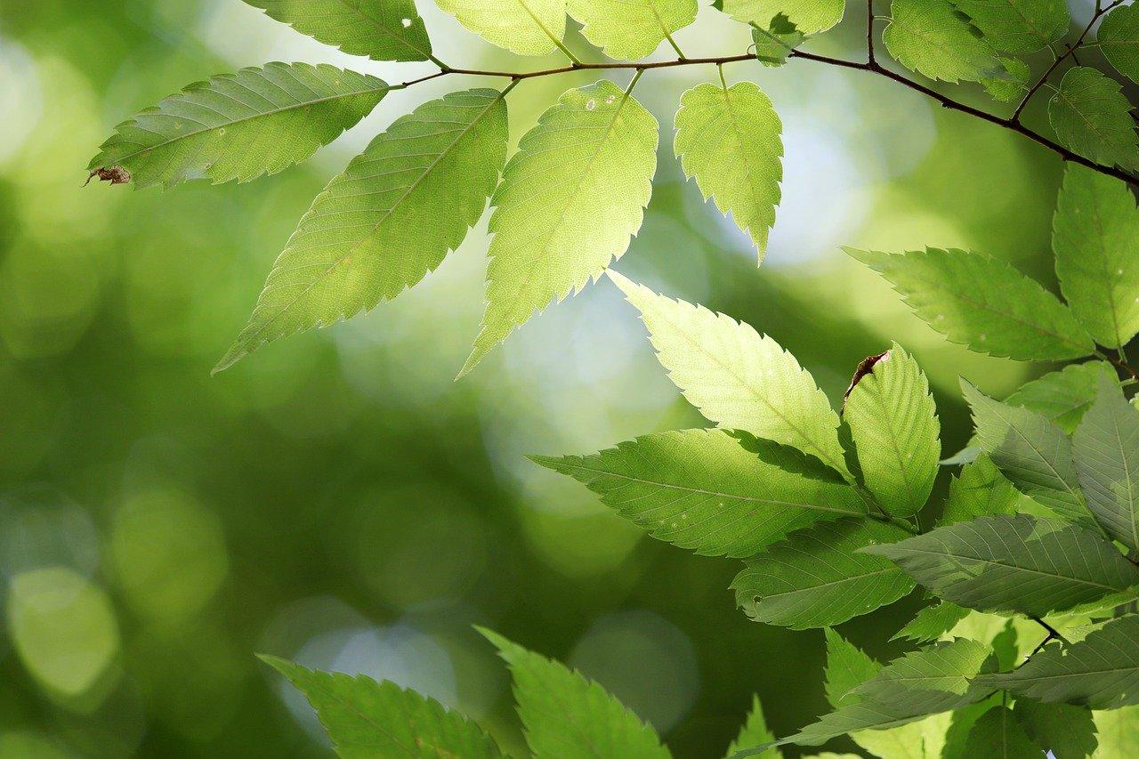Да засадим 100 дръвчета!